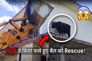 Amazing rescue of bull by JCB! ? | Bull Rescue | JCB Rescue