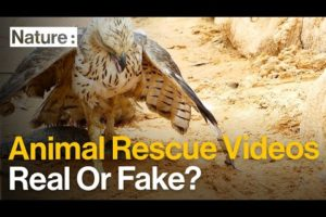 Are These Animal Rescue Videos for Real?
