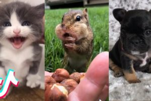 Are These the Cutest Pets on TikTok? 🤔😻
