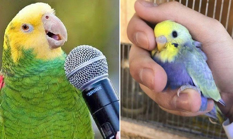 Baby Animals ? Funny Parrots and Cute Birds Compilation (2020) Loros Adorables Recopilación #2