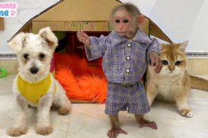 BiBi monkey has fun playing with puppy and cats
