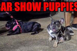 CUTEST DOGS OF 2020 Compilation! (CAR SHOW PUPPIES! - Dogs Across Texas LOL)