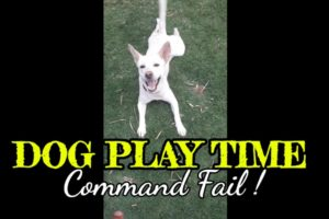 Dog play time| Dog command fail |Animals video|Puppy #shorts