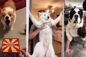 Dogs Doing Funny Things ~ Cutest Pets of TikTok | Fluff Planet