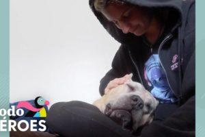Esta mujer rescata a todos los perros que nadie más quiere | Dodo Héroes | El Dodo