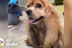 Este perro perdió casi 3 kilos de pelo enredado | El Dodo