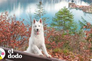 Este perro vive en el lugar más hermoso del mundo   El Dodo
