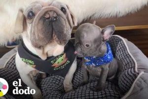 Estos son los perritos extraterrestres más adorables del mundo | El Dodo