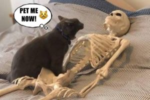 Funniest Pets of 2021 😂 - Cutest Animals Ever | Fluff Planet