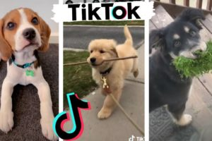 Funny DOGS of TikTok ~ Cute Puppies ~ Best Doggos of TIK TOK Compilation!