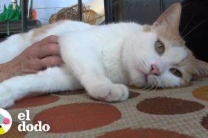 Gato abandonado por su familia es adoptado con su mejor amigo I El Dodo