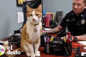 Gato que vive en la estación de policías es el supervisor de todos | El Dodo