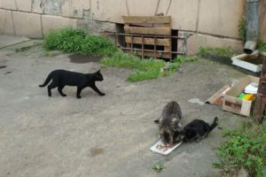 Homeless hungry cats in the street. rescue animals,animals,cats,rescue cats,abandoned kittens