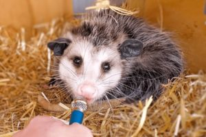 I interviewed animals with a tiny mic