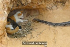 Investigation exposes videos depicting fake animal rescues