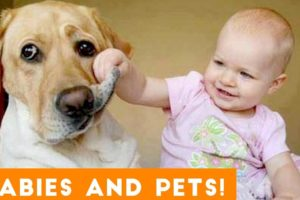 Most Adorable Animal and Baby Compilation 2018   Funny Pet Videos