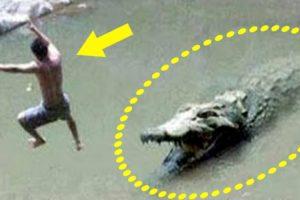 Near Death Animal Encounters - Animal Encounters 7 - Scary Animal Close Calls
