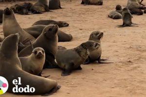 Pequeña foca es liberada de una red | El Dodo