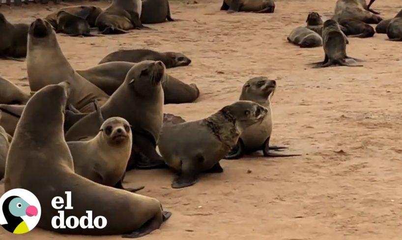 Pequeña foca es liberada de una red   El Dodo