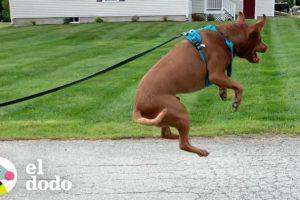 Perro rescatado brinca de felicidad | El Dodo
