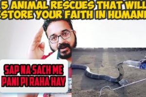 Rj Reaction to 5 animal rescues that will restore your faith in humanity