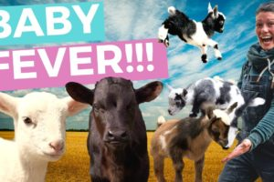 Spring Baby Animals on the Farm // Homesteading
