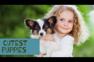 Top Cutest  Puppies In The World |Dog Breeds| Puppies Breed Name|German shepherd,Shih Tzu & Many Mor