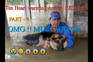 Top Hilarious heart breaking animal rescues in india | You will be cry. PART- 4