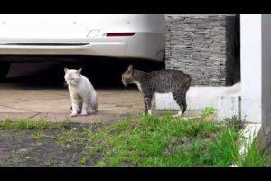 #short #youtubeshort #ytshorttwo cats fighting animal fight video