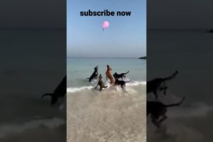 Sweet Dog 🐕 Dogs Playing with Balloons | mudassir animals point | #dog | #animals | #shorts