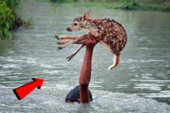 जब इंसानों ने बचाई जानवरों की जान   Greatest Animal Rescues By Humans   Animals Asked for Help Hindi
