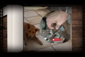 How to clean stray dog from  a lot of mangoworms attacked! Animal rescue video #288