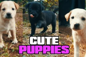 Cute baby animals Videos Compilation cutest moment of the animals - Cutest Puppies 2021