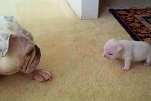 AWW CUTE BABY ANIMALS - Funny and cute moments of animal loving family - OMG Animls Soo Cute #25