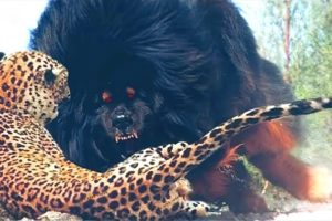 20 Dogs That Are Nightmares To Wild Animals