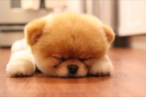 30 MOST CUTEST PUPPIES IN THE WORLD