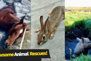 8 Awesome Animal Rescues!