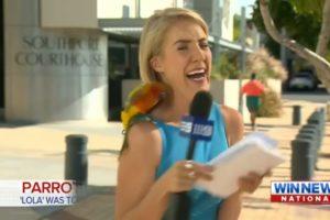 Animals VS News Reporters