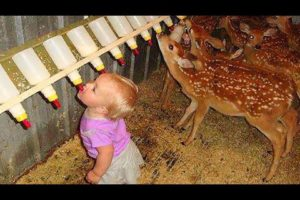 Babies and Kids Playing with farm Animals - Animalz TV