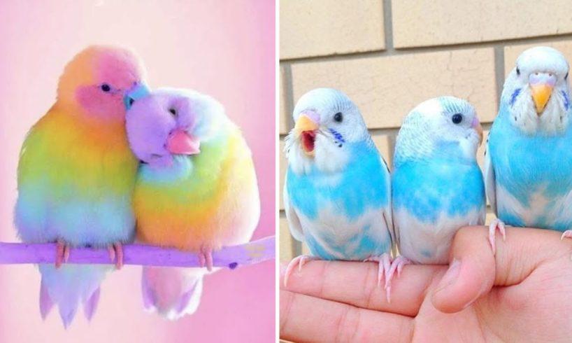 Baby Animals ? Funny Parrots and Cute Birds Compilation (2020) Loros Adorables Recopilación #6