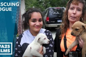 Caught On Camera - Abandoned Puppies Rescued by High School Girl - Howl & Hope For DoDo Dogs