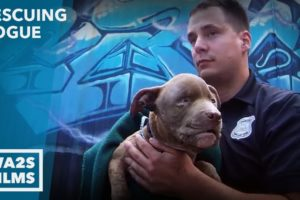 Cruelty Call Leads Dog Rescuer to Injured Puppy - Hope For Dogs | My DoDo