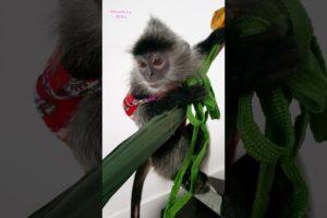 Cute Animals Playing Toys | Funny Animals Monkey Bibi #5