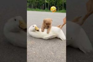 Cute Puppies Doing Funny Things, Cutest Puppies#353.