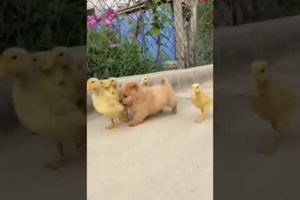 Cute Puppies Doing Funny Things, Cutest Puppies#375.