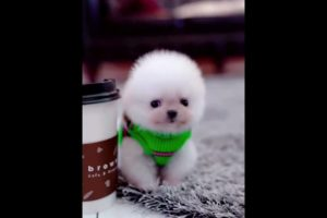 Cute Puppies Doing Funny Things|Cutest Puppies 2021#493.