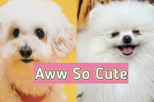 Cutest Dogs🐶 | Funny and Cute Puppies/Dogs Video | Aww So Cute🥰