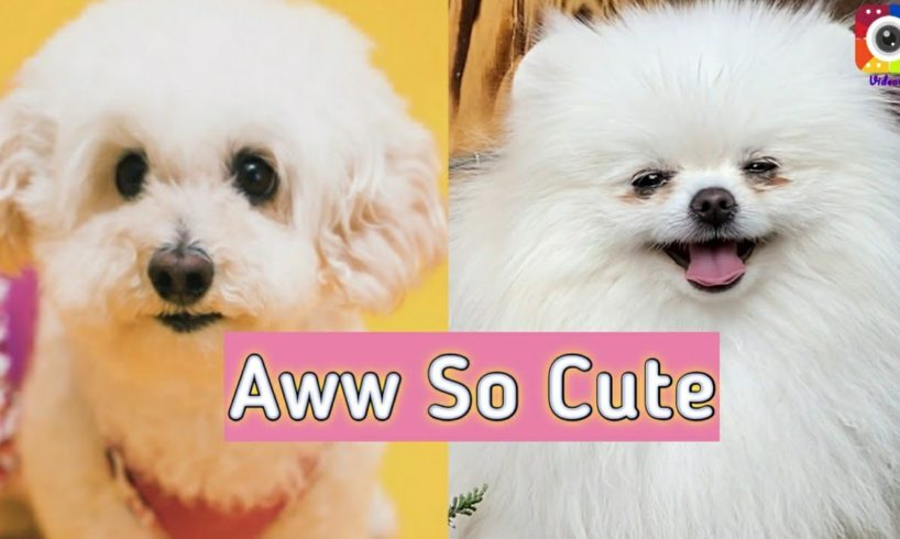 Cutest Dogs?   Funny and Cute Puppies/Dogs Video   Aww So Cute?