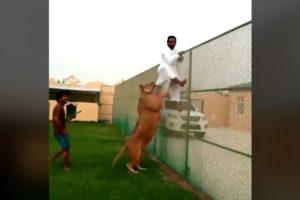 Dangerous Animals CAUGHT Being Friendly #2