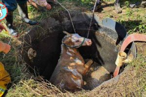 Dramatic Rescue Horse Trapped in Septic Tank | Heartbreaking Animal Rescues